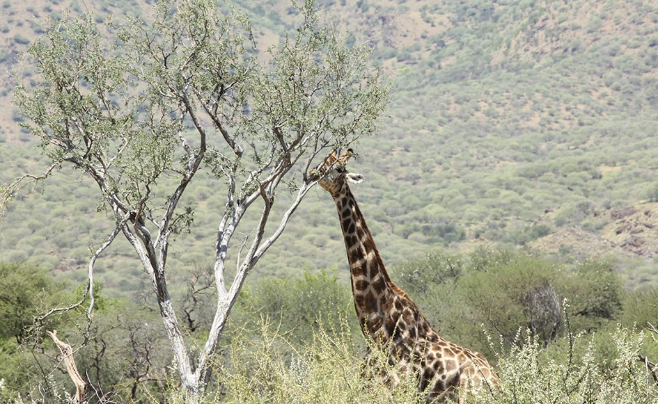 blog_coco_waterbergplateau_namibia_16