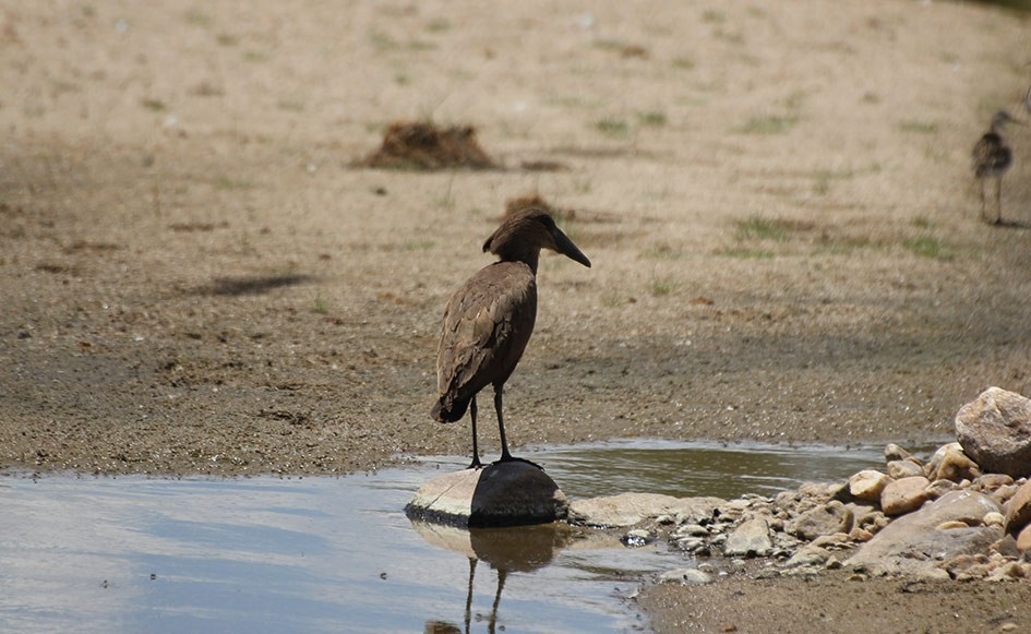 blog_coco_waterbergplateau_namibia_18