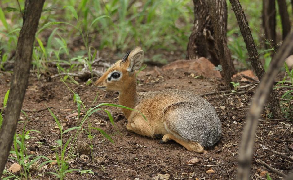 blog_coco_waterbergplateau_namibia_20