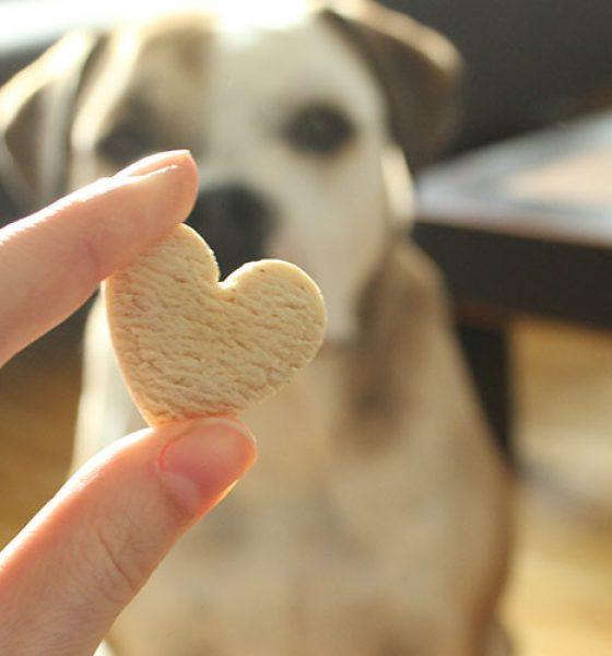 Test: Die Foodbox für Hunde, Pfötchenbox