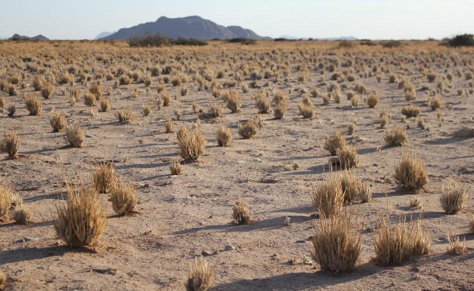 blog_coco_desertcamp_02