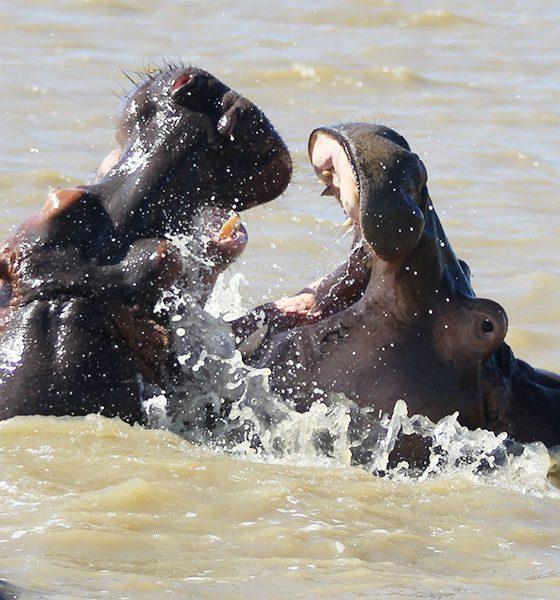 Süd Afrika – Hippo Tour in Saint Lucia