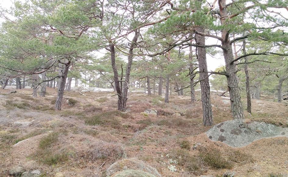 blog_coco_schweden_goeteborg07