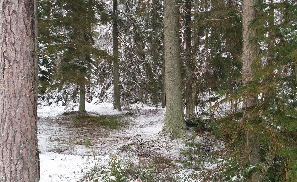 blog_coco_schweden_vaernen_wanderung01