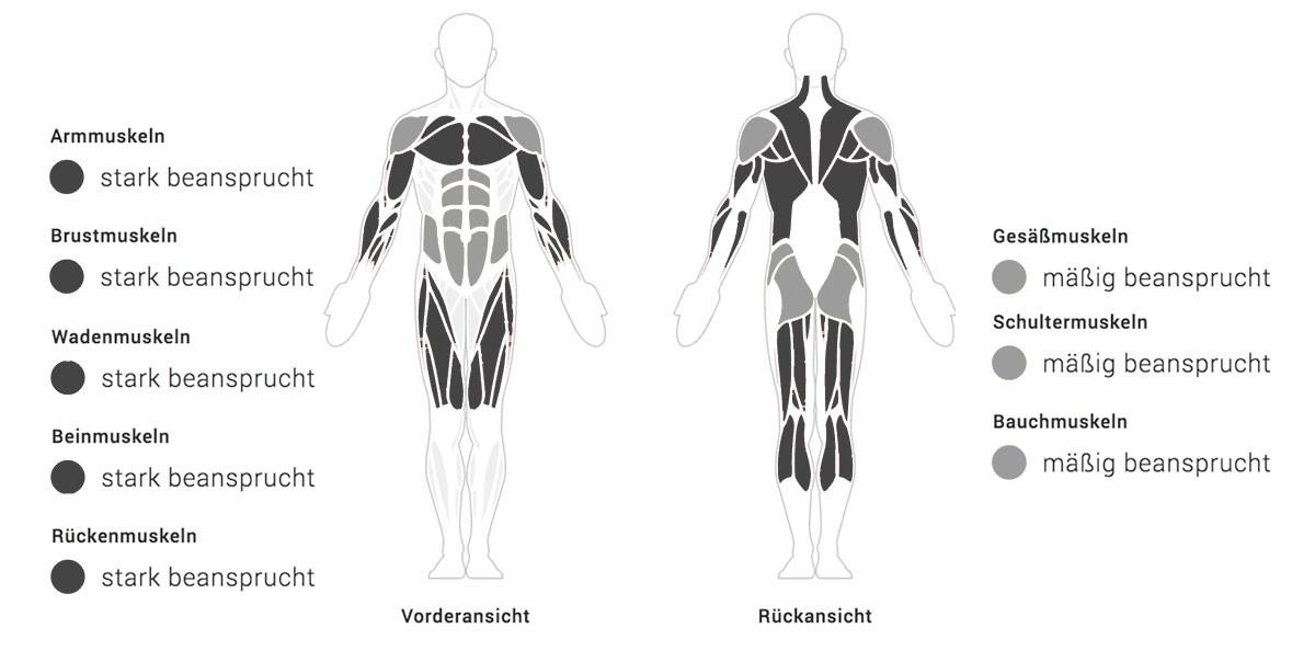 Ruderst du schon Weniger Fett & mehr Muskeln • Fitness